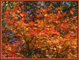 Nov03_244_Daibosatsurei_FallColorsRC