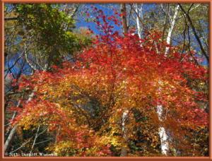 Nov03_256_Daibosatsurei_FallColorsRC