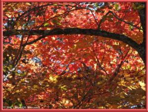 Nov03_269_Daibosatsurei_FallColorsRC