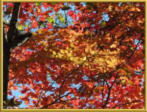 Nov03_272_Daibosatsurei_FallColorsRC
