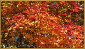 Nov03_297_Daibosatsurei_FallColorsRC