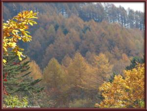 Nov03_46_Daibosatsurei_FallColorsRC