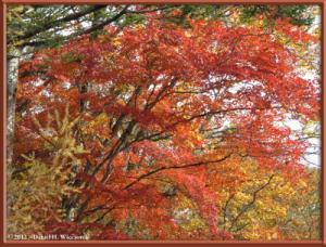 Nov03_59_Daibosatsurei_FallColorsRC