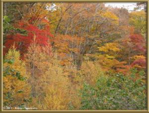 Nov03rd_53_DaibosatsureiFallColorsRC