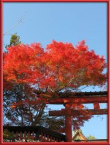 Nov09_13_Takao_Kobotoke_FallColorsRC