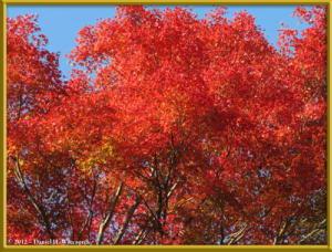 Nov09_14_Takao_Kobotoke_FallColorsRC