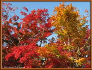 Nov09_18_Takao_Kobotoke_FallColorsRC