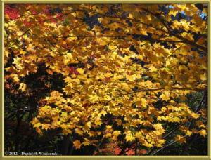 Nov10_121_OkutamaMukashiMichiFallColorsRC