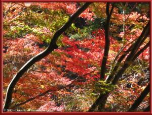 Nov10_126_OkutamaMukashiMichiFallColorsRC