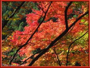 Nov10_128_OkutamaMukashiMichiFallColorsRC