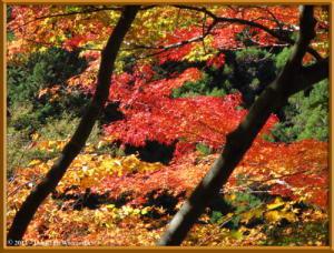 Nov10_133_OkutamaMukashiMichiFallColorsRC