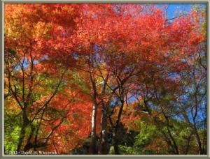 Nov10_165_OkutamaMukashiMichiFallColorsRC