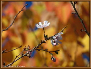 Nov10_69_OkutamaLakeAreaFallColorsRC