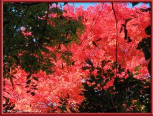 Nov10_93_OkutamaMukashiMichiFallColorsRC
