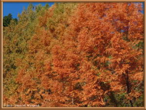 Nov18_100_HigashiNipparaRoad_FallColorRC