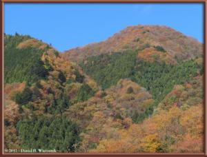 Nov18_111_HigashiNipparaRoad_FallColorRC
