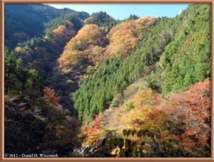 Nov18_117_HigashiNipparaRoad_FallColorRC