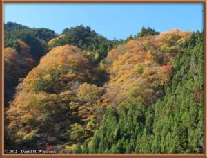 Nov18_120_HigashiNipparaRoad_FallColorRC
