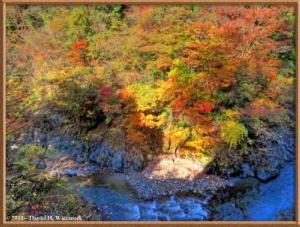 Nov18_122_123_124_TMDE_HigashiNipparaRoad_FallColorRC
