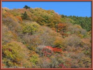 Nov18_142_HigashiNipparaRoad_FallColorRC