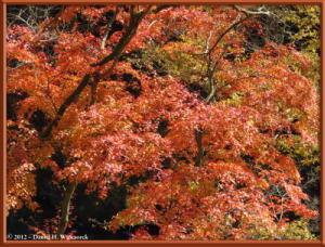 Nov18_147_HigashiNipparaRoad_FallColorRC