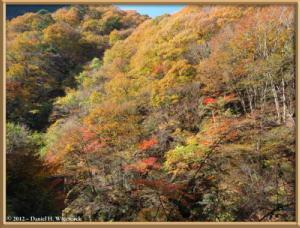 Nov18_161_HigashiNipparaRoad_FallColorRC