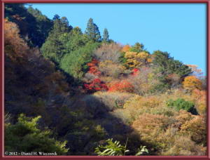 Nov18_176_HigashiNipparaRoad_FallColorRC
