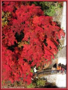Nov18_184_MitakeSawai_FallColorRC