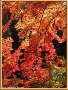 Nov18_190_MitakeSawai_FallColorRC