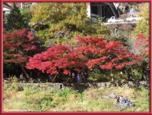Nov18_267_MitakeSawai_FallColorRC