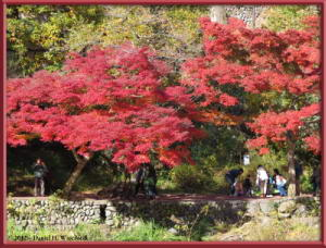 Nov18_272_MitakeSawai_FallColorRC