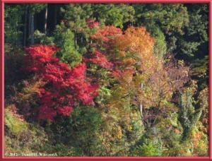 Nov18_27_HigashiNipparaRoad_FallColorRC