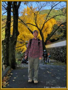 Nov18_286_MitakeSawai_FallColor_GinkgoRC