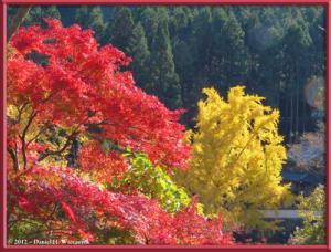 Nov18_315_MitakeSawai_FallColor_GinkgoRC