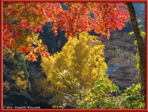 Nov18_317_MitakeSawai_FallColor_GinkgoRC