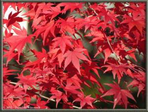 Nov18_328_MitakeSawai_FallColorRC