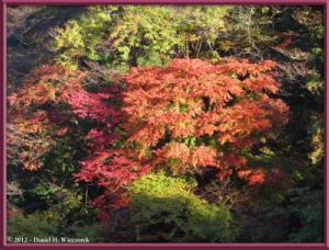 Nov18_35_HigashiNipparaRoad_FallColorRC