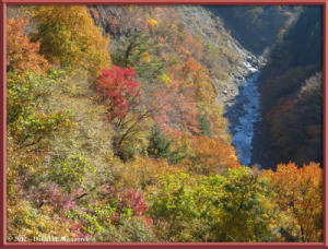 Nov18_61_HigashiNipparaRoad_FallColorRC