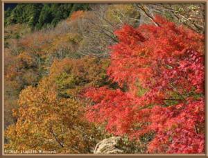 Nov18_76_HigashiNipparaRoad_FallColorRC