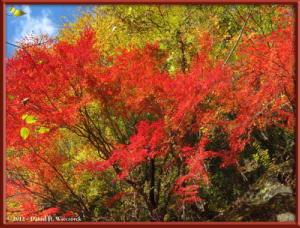 Nov18_81_HigashiNipparaRoad_FallColorRC