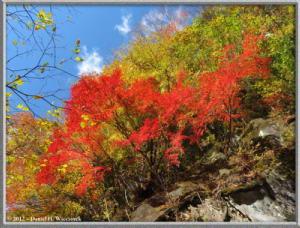 Nov18_82_HigashiNipparaRoad_FallColorRC