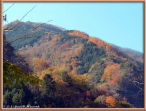 Nov18_88_HigashiNipparaRoad_FallColorRC