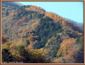 Nov18_89_HigashiNipparaRoad_FallColorRC