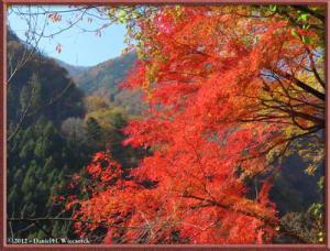 Nov18_94_HigashiNipparaRoad_FallColorRC