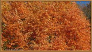 Nov18_97_HigashiNipparaRoad_FallColorRC