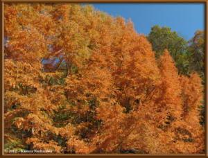 Nov18th_116_HigashiNipparaRoadFallColorsRC