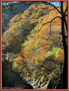 Nov18th_190_HigashiNipparaRoadFallColorsRC