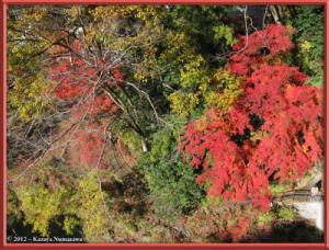Nov18th_225_MitakeSawaiFallColorsRC