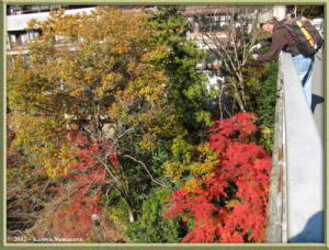 Nov18th_229_MitakeSawaiFallColorsRC