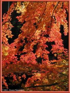 Nov18th_242_MitakeSawaiFallColorsRC